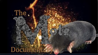 Nonton The Mole  Documentary Science Project Film Subtitle Indonesia Streaming Movie Download