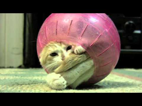 Funny kitten stuck inside hamster ball