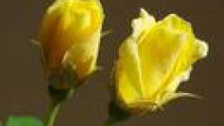 IO,TU E LE ROSE  Orietta Berti ( I,you and roses)