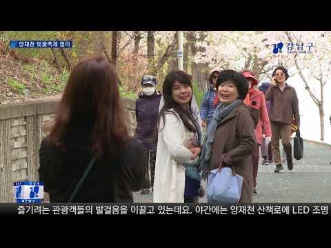 강남으로 벚꽃 보러 오세요!