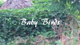 Robin called me outside to see some baby birds in a nest. I filmed this with my cell phone. This is the first time I have filmed something like this. Mama is feeding them well, and we made sure not to touch them.
