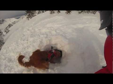 Jackson Hole Doggie GoPro - ©Jackson Hole Mountain Resort