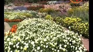 Significance of Flowers- Mahant Naval Kishor talks about the importance of