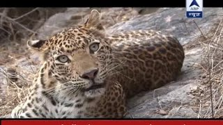 Pauri Garhwal India  city photos : Jungle: Episode 3: Watch man-eaters leopards of Pauri Garhwal