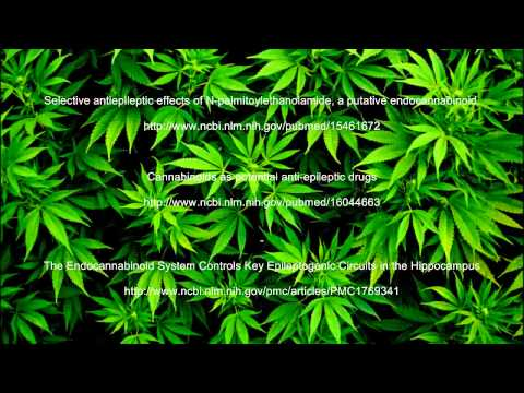 Cannabis Research   Seizures and Epilepsy   Cannabinoid Studies
