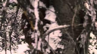 7. 2015 Yamaha SR Viper M TX Conquer Snow