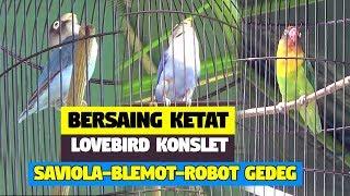 Video [ BOROBUDUR CUP ] BERSAING KETAT LOVEBIRD KONSLET SAVIOLA - BLEMOT - ROBOT GEDEG MP3, 3GP, MP4, WEBM, AVI, FLV Desember 2018