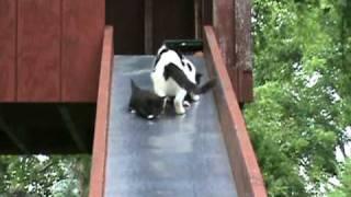 Кошки на горке