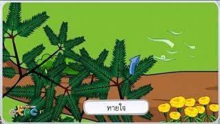 สื่อการเรียนการสอน พืชในท้องถิ่น  ป.1 วิทยาศาสตร์