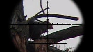 Video FX Bobcat .22 Squirrel Pest Control MP3, 3GP, MP4, WEBM, AVI, FLV Oktober 2017