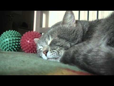 il-gatto-che-starnazza-nel-sonno