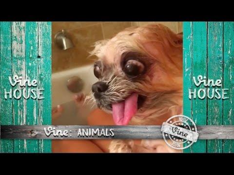Vine: Animals #01