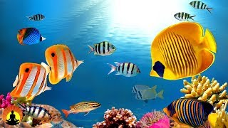 Khmer Documentary - Life of the Ocean 8K ULTRA HD - 500 Marine Species