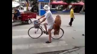 Dog guards owners bike from being stolen