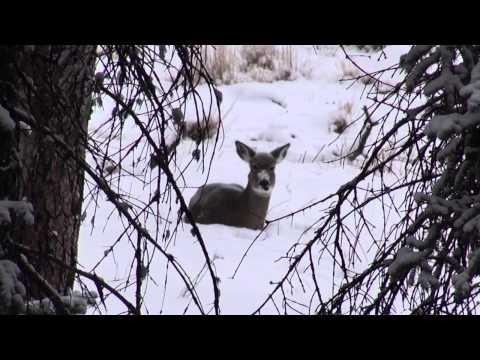 Run2Gun TV Episode 11 Climb to the Highest Peak East of the Rockies