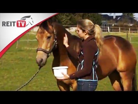 Pferdepflege: Hausmittel für Pferde