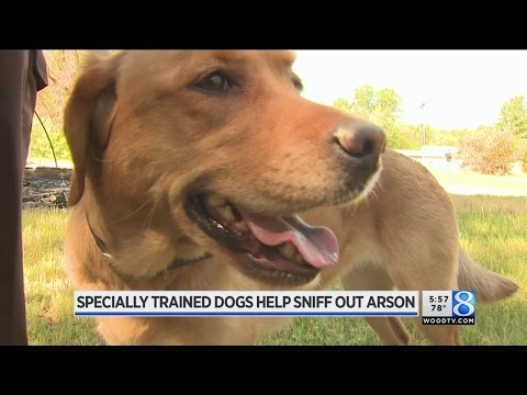 K-9 arson fighters show off skills in annual recertification