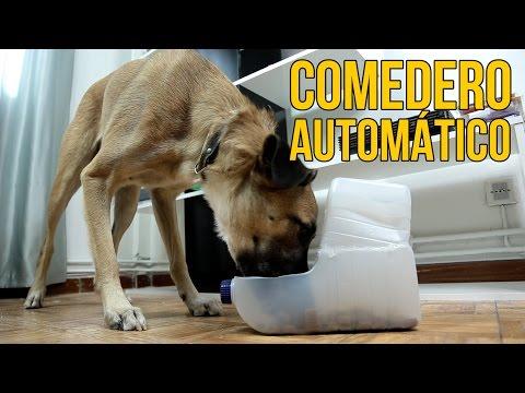 Cómo hacer un comedero automático para perros (Experimentos Caseros)