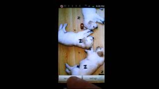 Sleeping Puppies LWP YouTube video