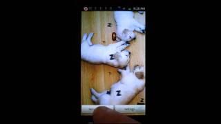 Sleeping Puppies LWP YouTube video