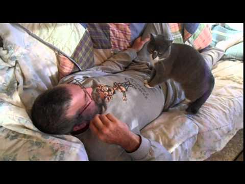 il-gatto-esperto-in-pronto-soccorso