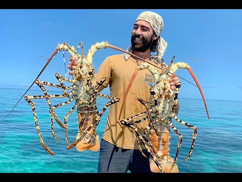 MONSTER LOBSTER |  Wrangled on the Great Barrier Reef Australia (B2B: EP 13)