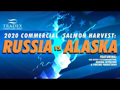 3MMI - Russian Pink & Chum vs Alaska's Salmon Season