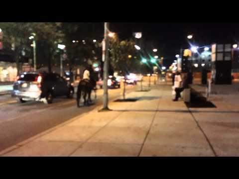 North Philadelphia Horse-riding