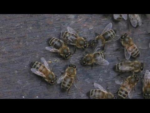 Ein Urteil für die Bienen: EU-Gerichtshof weist Kla ...