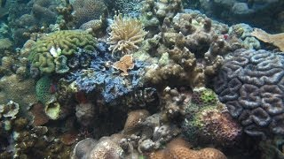Woods Hole Oceanographic Institution Associate Scientist Anne Cohen and her team are studying the coral reefs in Palau.