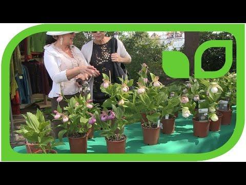 Orchideen Gärtner:  Christian Schreiner - Gärtner Schreiner über winterharte Orchideen