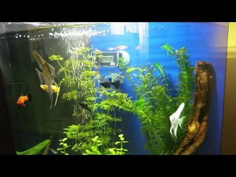 Aquarium AquaArt Explorer Tetra 60 litres