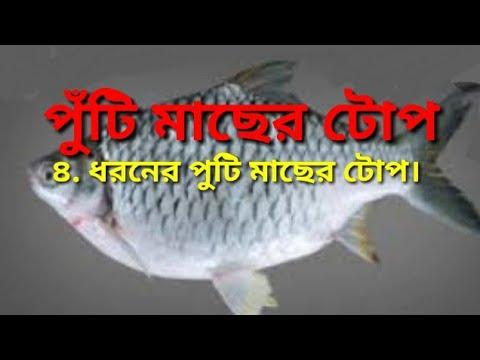 পুঁটি মাছের টোপ। How to make puti fish bait. puti machar top.. kornofuli hook fishing