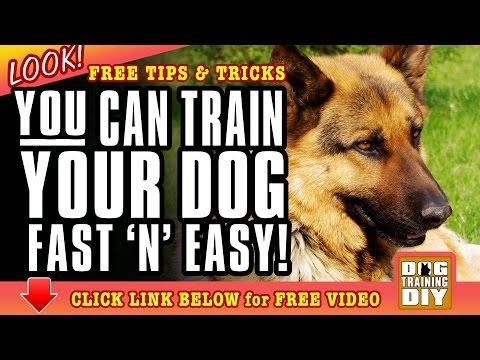 Dog Training Sacramento | FREE Dog Training Tips | Dog Obedience Training Sacramento, CA