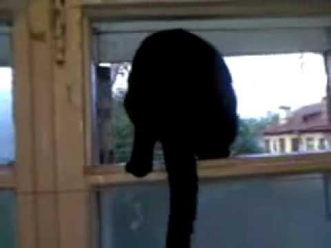 千萬網友笑翻....一隻學狗叫的貓!!!!!是汪還是喵~~