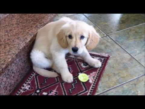 WATCH This Puppy's Adorable Reaction To Trying A Lime For The First Time