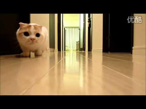 這隻貓前輩子一定是個忍者!