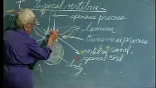 Integrative Biology 131 - Lecture 04:  Skeletal System