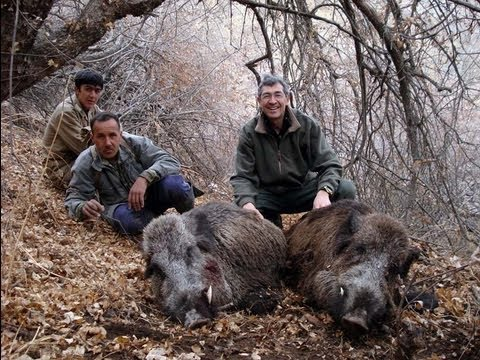SANGLIER Wild BOAR HUNTING (Chasse) North TADJIKISTAN by Seladang