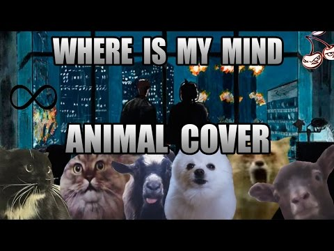 The Pixies 'Where Is My Mind' as done by cats, dogs and goats? Sign us up.