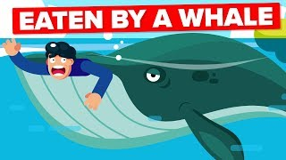 Video What If a Whale Accidentally Swallowed You? MP3, 3GP, MP4, WEBM, AVI, FLV Januari 2019