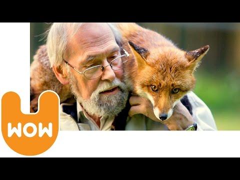 uomo salva volpe! oggi vivono in casa insieme!