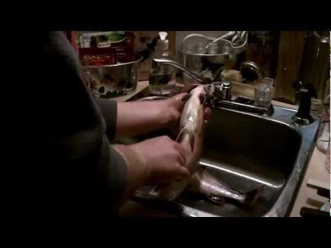 Une drôle de surprise dans l'estomac de cette truite mouchetée