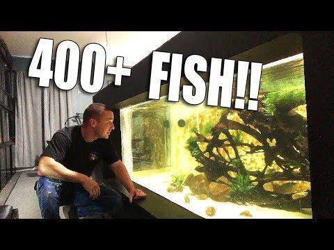 I ORDERED 400+ FISH!!_Akvárium. Heti legjobbak