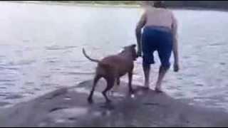 Reação de um cachorro pensando que seu dono esta em perigo