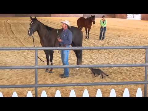 gatto-matto-fa-lagguato-al-cavallo-294