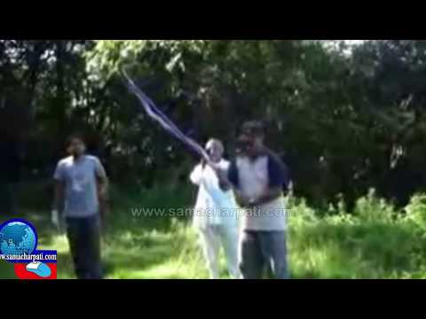 Danger King Kobra In Nepal पोखरामा किंग कोब्रा