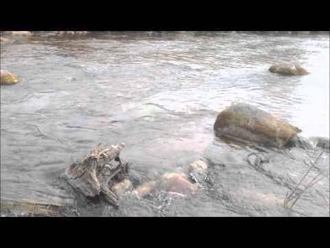 как ловить на реке луга