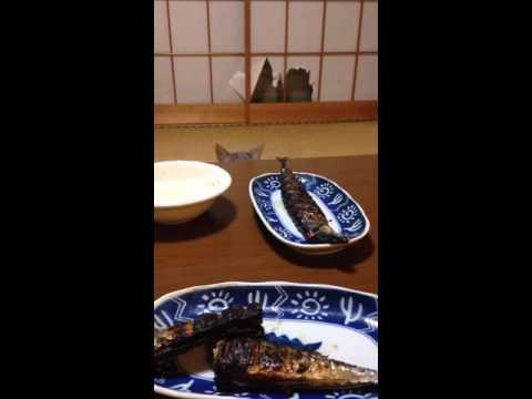 小貓拼命想摸燒魚不斷被主人阻止,結果最後竟然使出「絕地大反攻」讓主人笑到燒魚差點被攻陷!