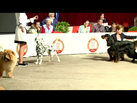 Dog show in the Principality